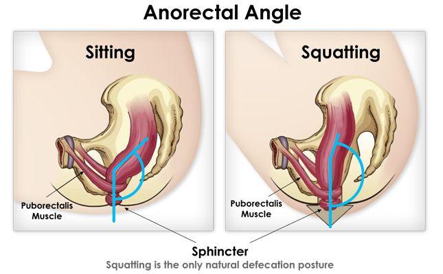 positionphysiologiqueHNI.jpg